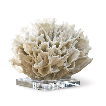 Picture of WHITE RIBBON CORAL