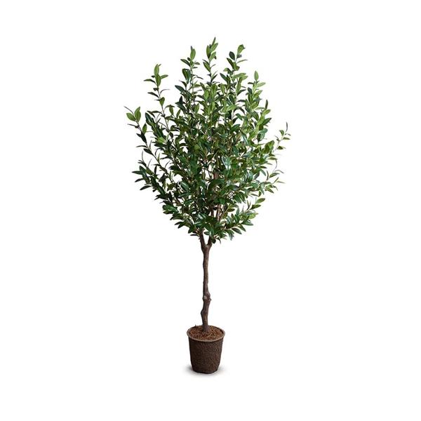 Picture of CAMILLIA LEAF TREE 8'