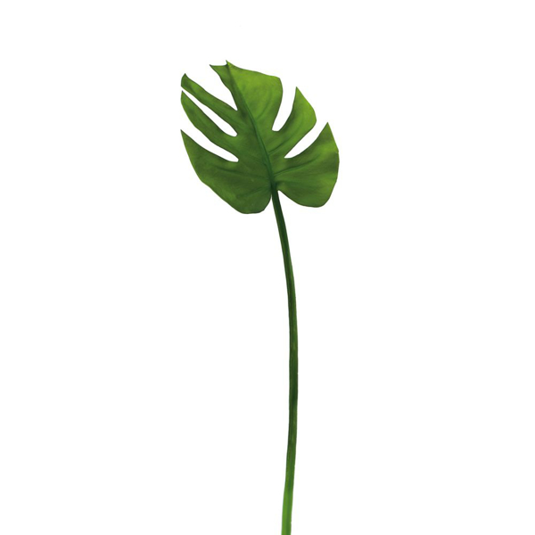 Picture of MONSTERA LEAF, 23L
